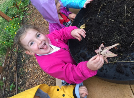 Kindergarten Explores Soil Food Web