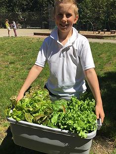 Students Harvest Garden