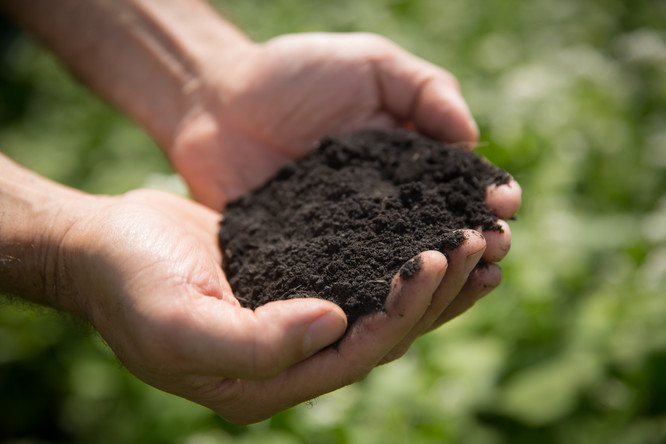 Regenerated soil
