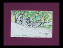 * Lemurs *
