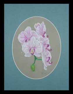 * Orchids *