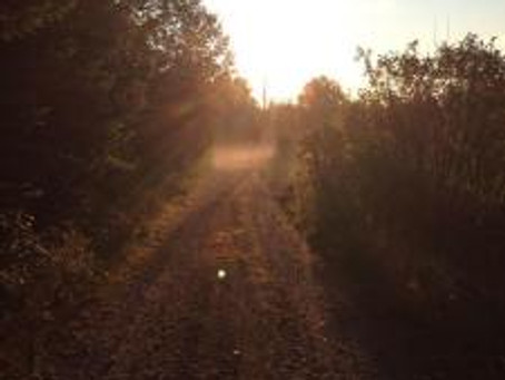 Sacred Travel…Shadows in the Mist [the woods surrounding Ossipee]