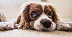 Incorporating Your Pets into Your Estate Plan