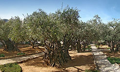 GARDEN OF GETHSEMANE - JERUSALEM.jpg