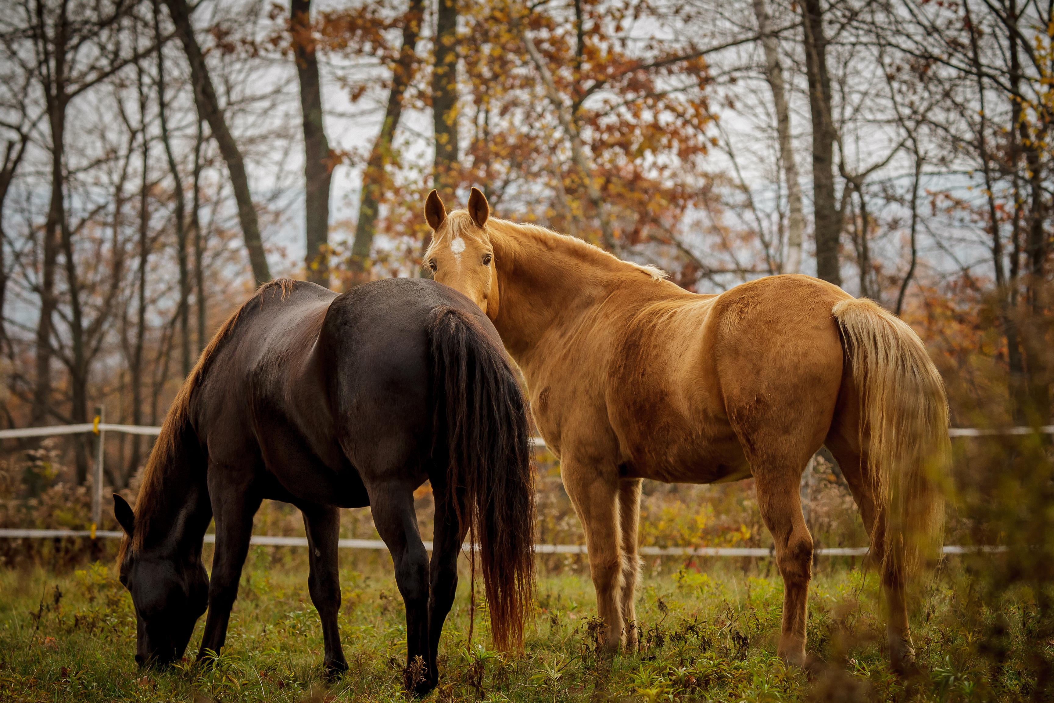 Fall horses-1
