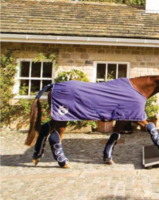 HBX Designed for your horse.jpg