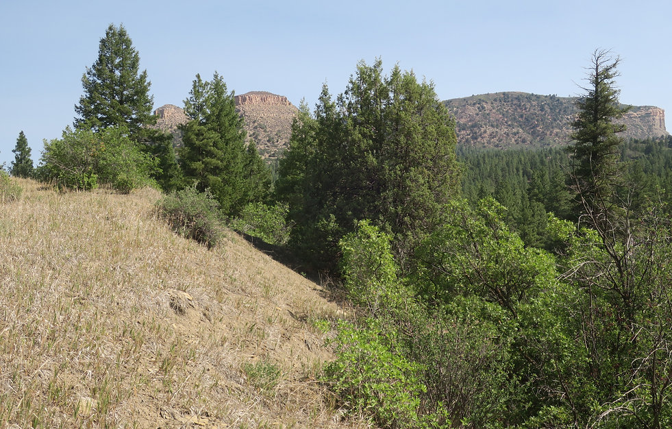 Twin Buttes from mouth of Wildcat Canyon