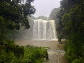 Whangarei National Reserve