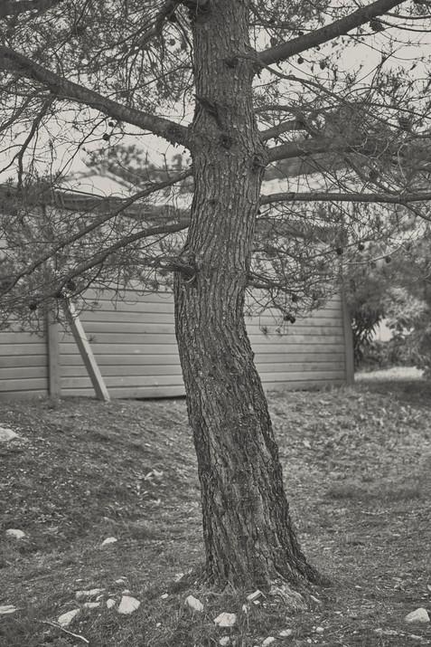 VINEYARD-GROVES-03.jpg