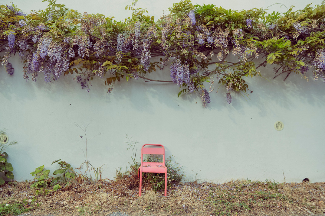 glycines & chaise