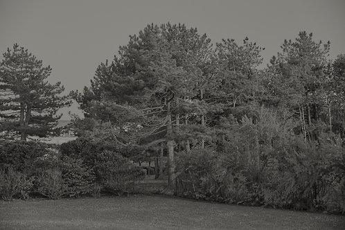 Trees around the basketball court