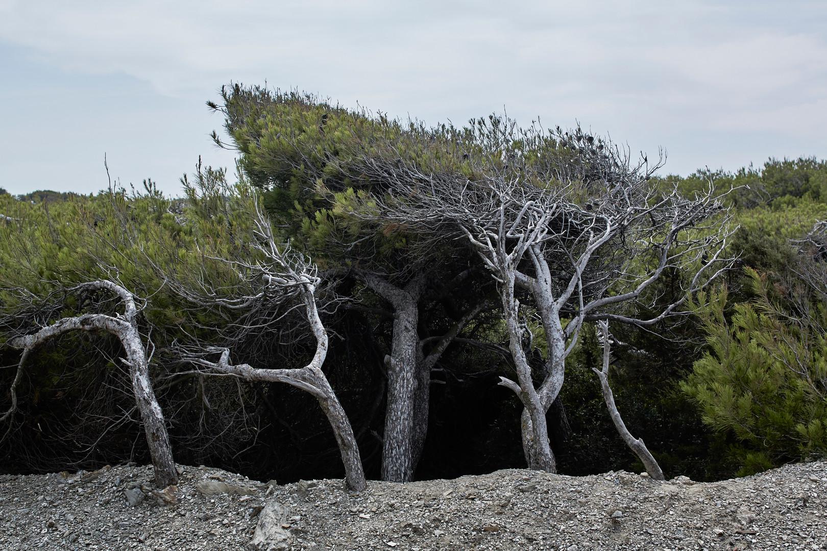 Tortured tree #01