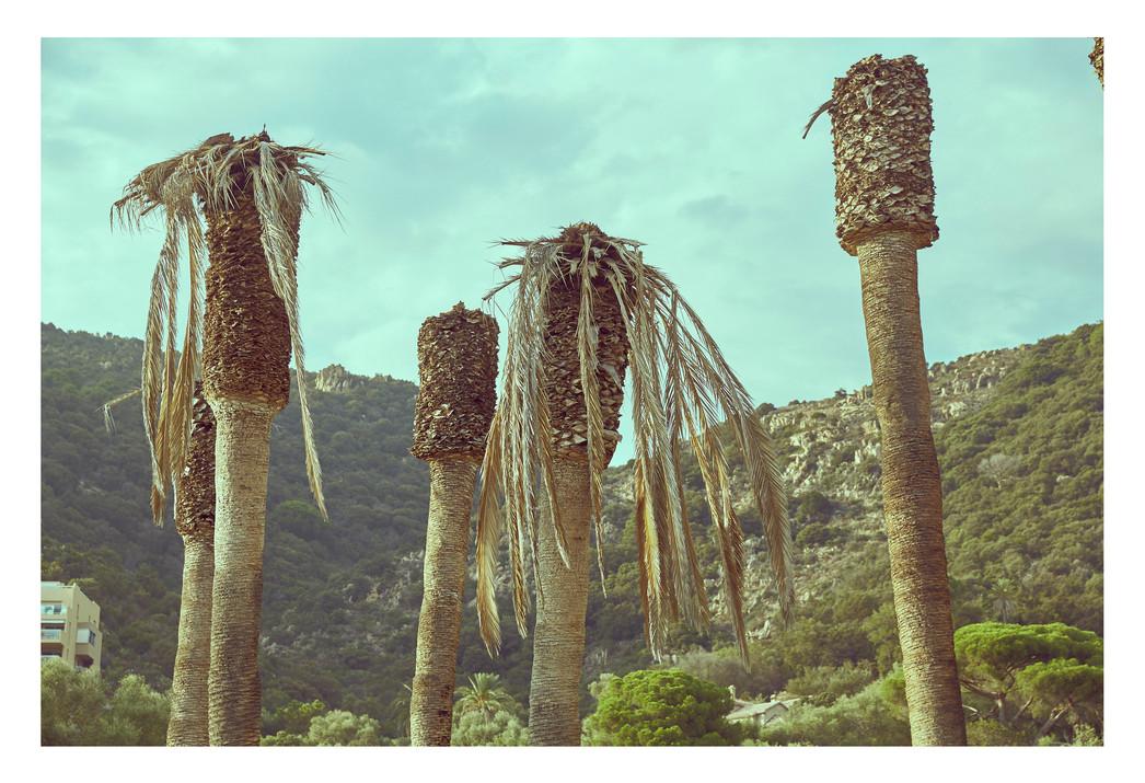 Sick palmtrees #01