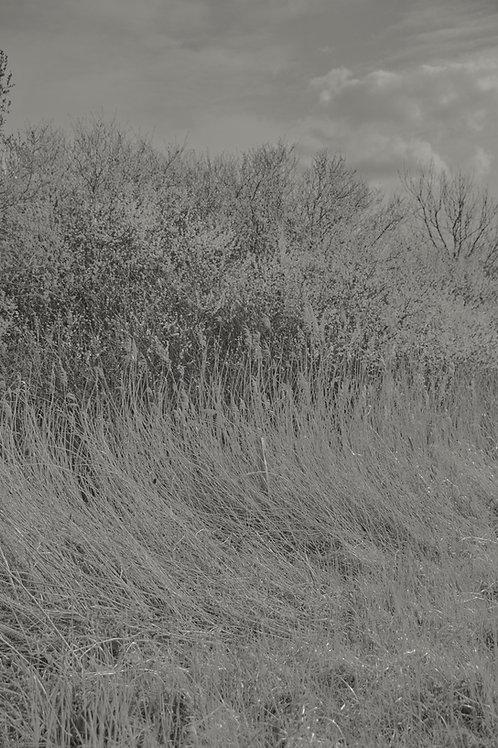 Fields #01