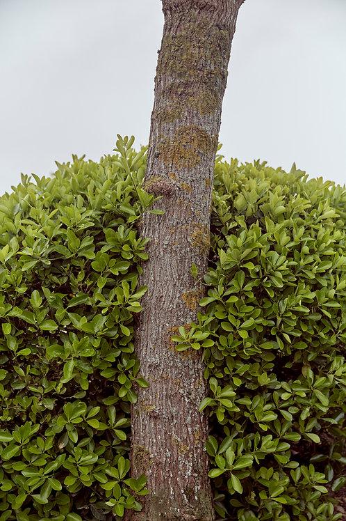 Tree and bush