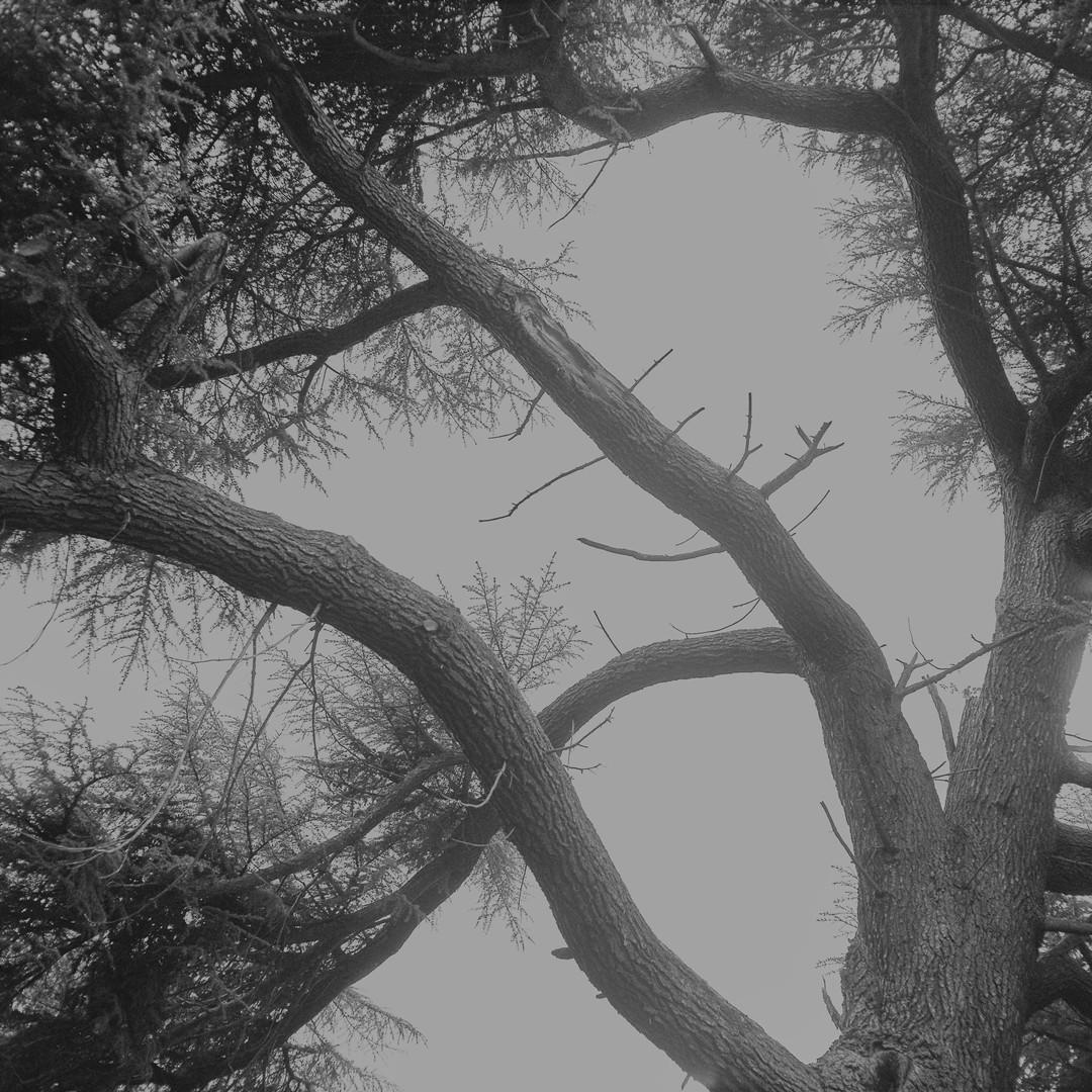 The grey tree #01