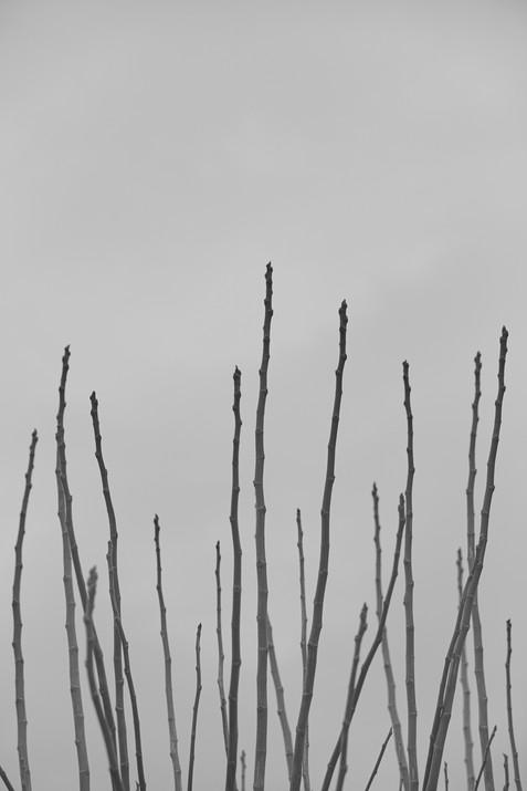 VINEYARD-GROVES-14.jpg