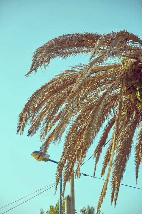 Palmtree leaves #01