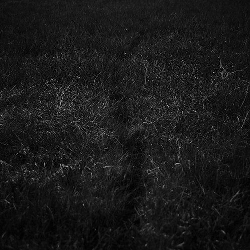 Trace in the grass