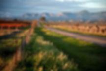 1B_Meadowlark_Entry_webpg.jpg