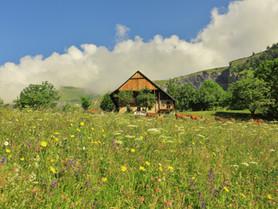 Photo7_prairie-fleurie-jarrier.JPG