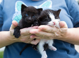 hands holding two small stray kittens