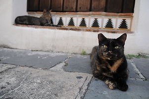 ear-tipped tortoiseshell outdoor cat sitting near building