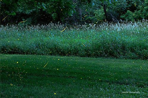 Fireflies at Dusk, Framed Print by Stephen Schiller