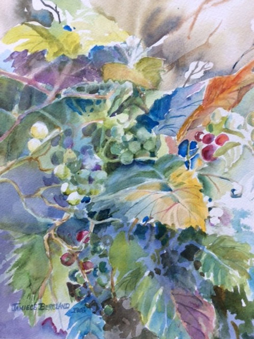 Grapes & Vines by Janiece Bergland