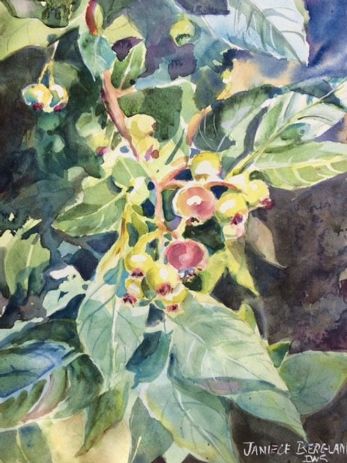Berries Not Yet Blue by Janiece Bergland