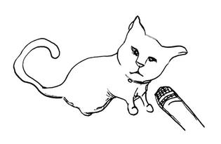 Interviewing cat