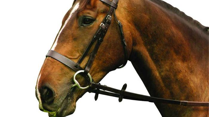 Mackey Classic Hunt Bridle