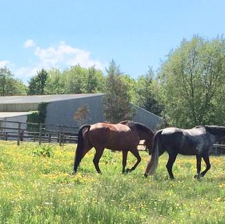 Abbeyglen Equestrian