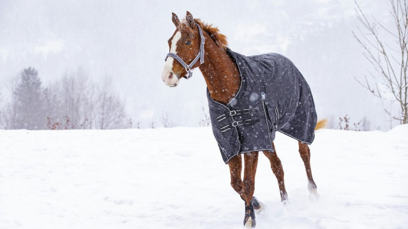 """RIDING WORLD """"OXFORD"""" WATERPROOF RUG, LINED WITH POLAR FLEECE"""