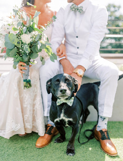how to include your dog in wedding, doggie bowtie, wedding party, diy flowers, groom watch, gold wat