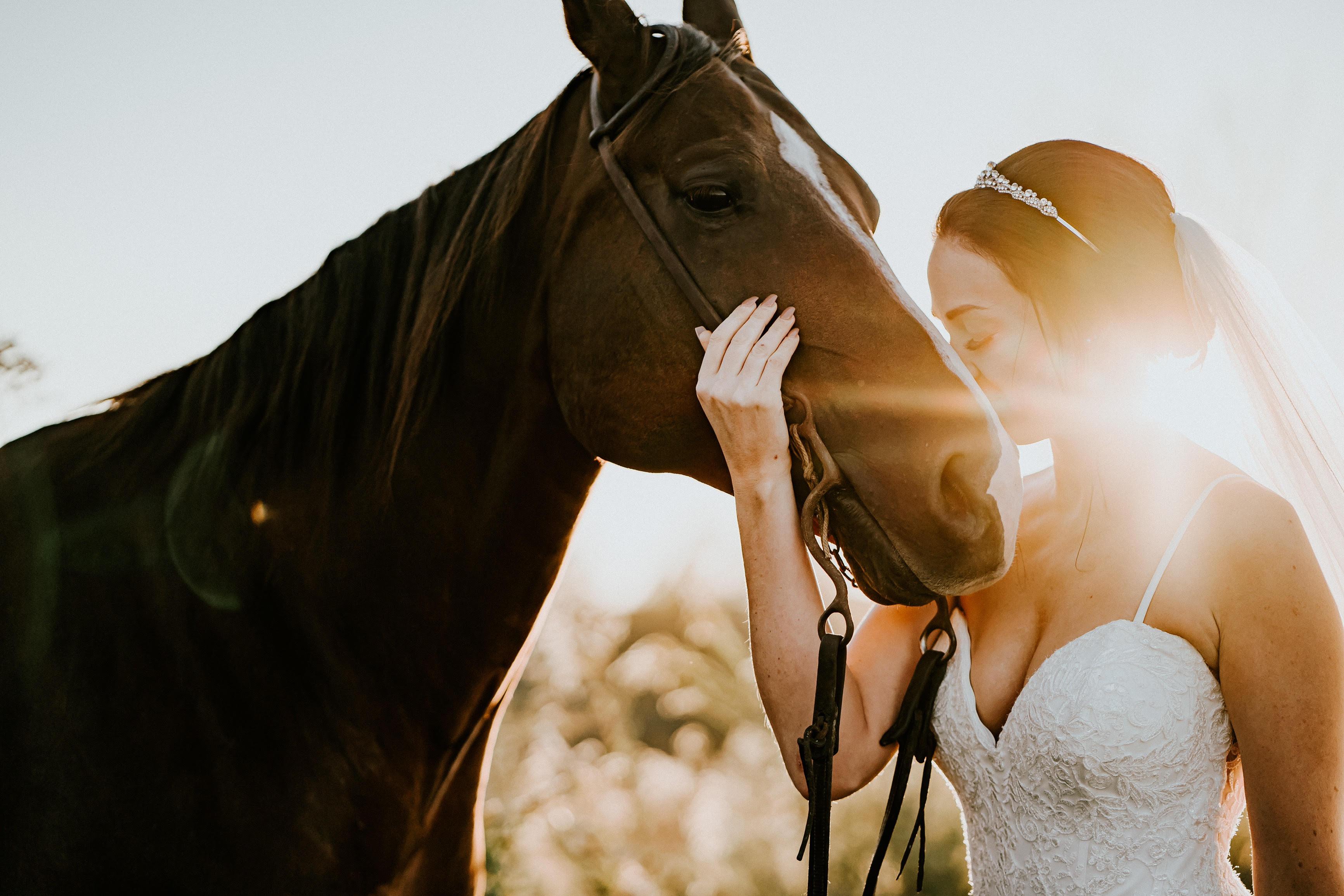 sunset wedding portraits on a farm