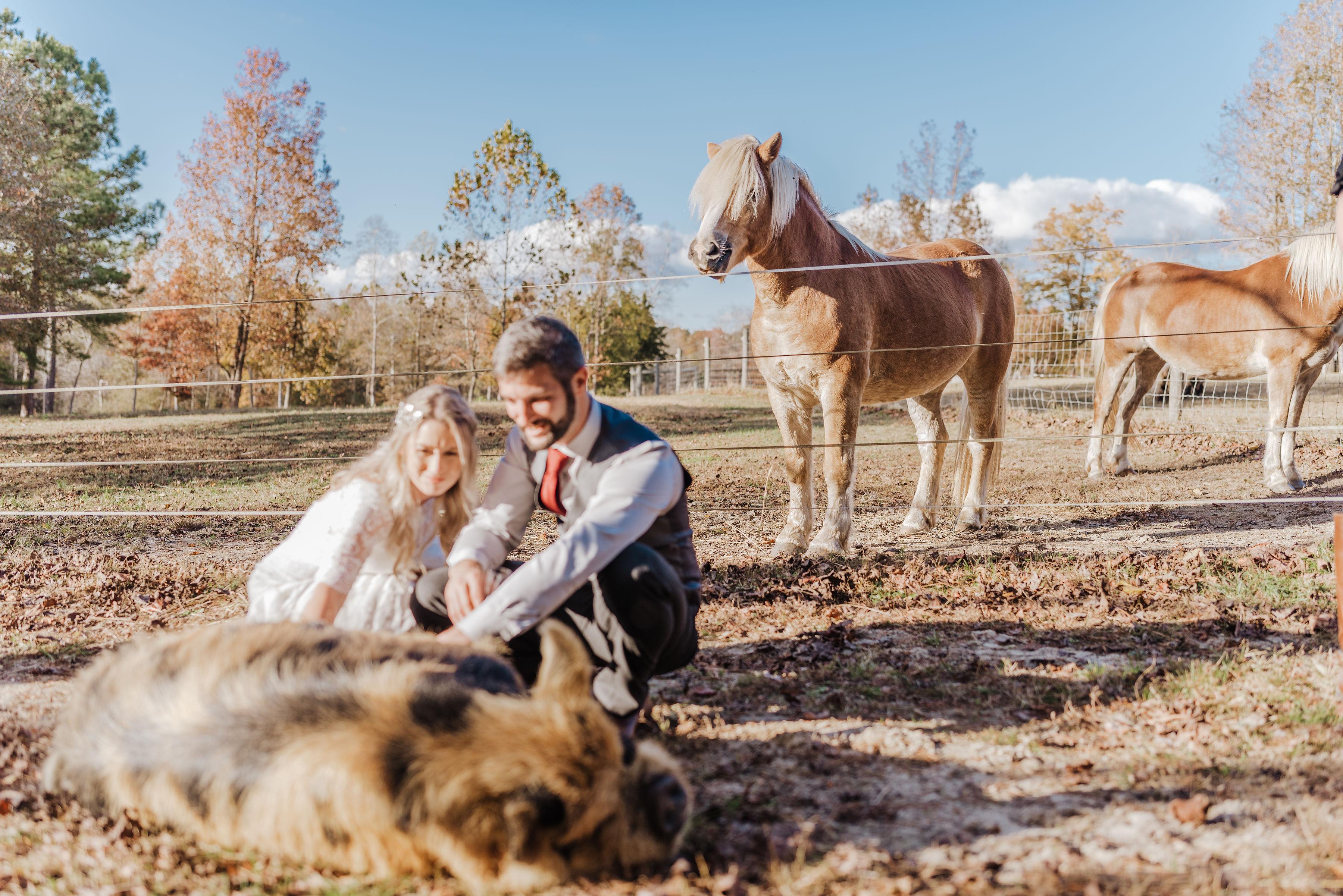 farm wedding venue with horses