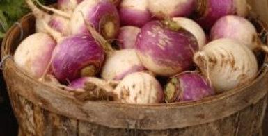 Turnip - Purple Top
