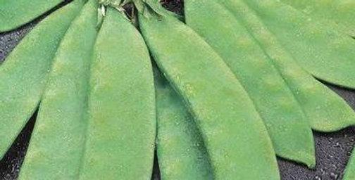 Peas - Snowflake, Snow peas