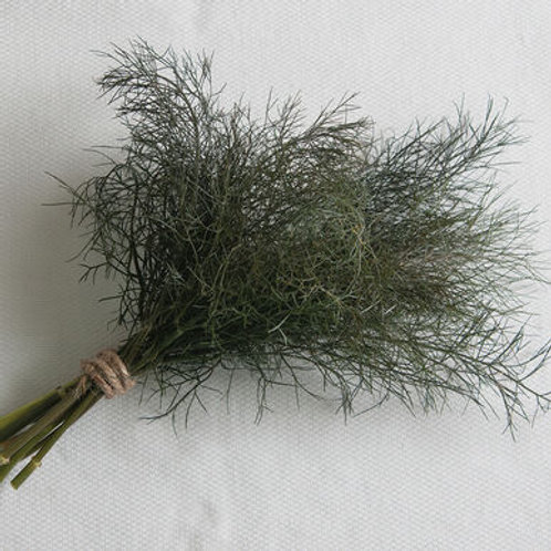 Herb Filler - Bronze Fennel