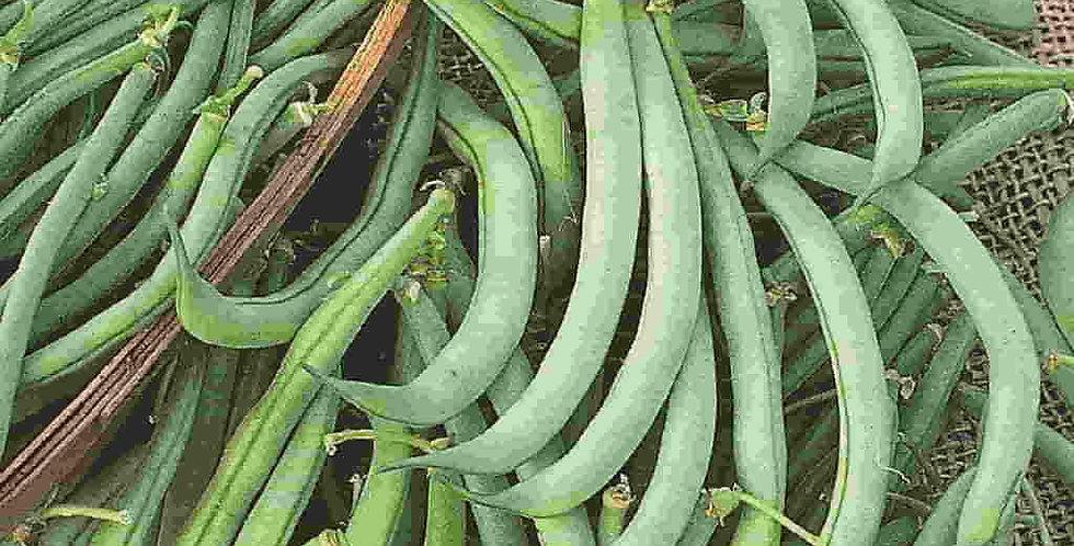 Beans, Tendergreen