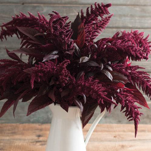 Amaranthus - Red Spike