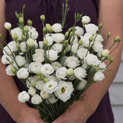 Lisianthus - Doublini White