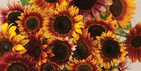 Sunflowers Bunch