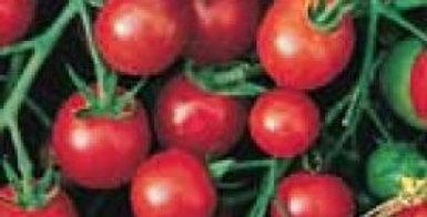 Cherry Tomato - Sweeties