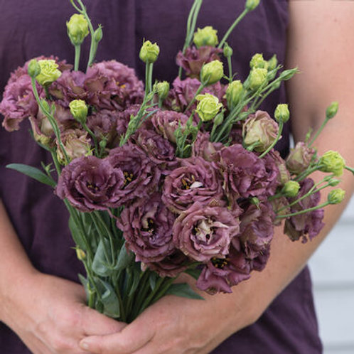 Lisianthus - Rosanne Deep Brown