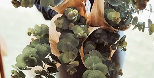 Eucalyptus Bunch - 5 Stems