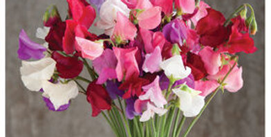 Sweetpea Bunch