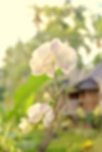 Flower in Prashanti garden in Ubud, Bali