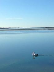 Port Albert Wildlife